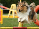 Choosing a Dog Sport for You and Your Canine