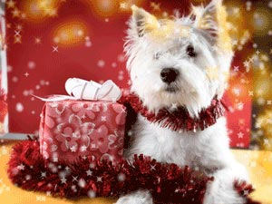 Holiday Safety for your Dog
