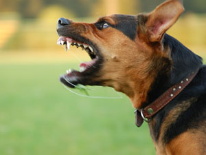 how to stop your dog growling at you