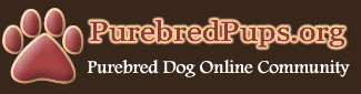 Welcome to the Purebred Dog Community