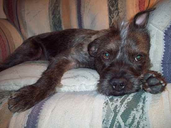 Image Seo All 2 Terrier Mix Post 17