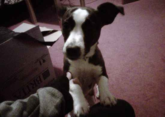 Jack Russell Terrier Mix