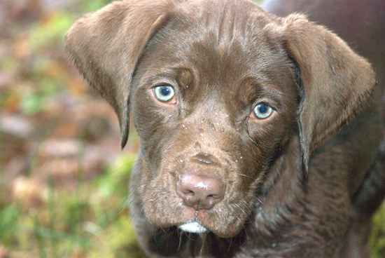 Pics Photos - Short Haired Springer Spaniel Pictures Hd