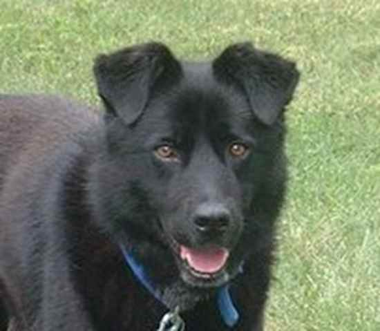 moonshadow the chow lab mix Quotes